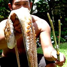 Photo of captured octopus and polespear