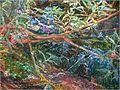 Ofelia Millais 2.jpg