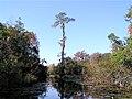 Okefenokee Swamp - Canal - panoramio.jpg