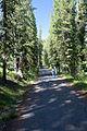 Old Road to Lone Star Geyser (3943881571).jpg