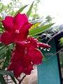 One of flower.jpg
