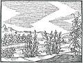 OrbisPictus b 038.jpg