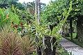 Orchid Garden Bali Indonesia - panoramio (29).jpg