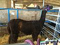 Oregon State Fair 2016 03.jpg