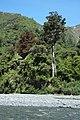 Orongorongo Valley.jpg