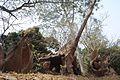 Osun Grove1.jpg