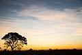 Pôr do sol no cerrado 07.jpg