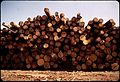 PONDEROSA PINE LOGS STACKED AT PINE INDUSTRY MILL - NARA - 542596.jpg