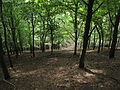 PP Biskoupky, pohled do lesa.jpg