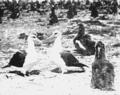 PSM V63 D327 Adult albatross among the chicks.png