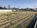 Paddy fields in Tajiri, Nishi, Fukuoka.jpg