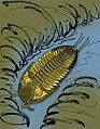 Paladin morrowensis.JPG