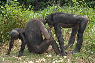 African Wildlife Foundation - Group of bonobos