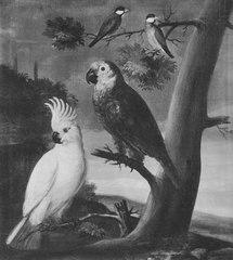 Papegojor och andra fåglar