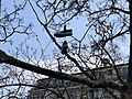 Parc de Mon-Repos, Lausanne, chaussures dans les arbres.jpg