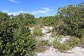 Parque Nacional da Restinga de Jurubatiba 08.jpg