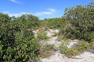 Atlantic Coast restingas - Restinga vegetation in Jurubatiba Sandbank National Park.