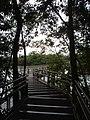 Pasarelas en el Parque Nacional Iguazú Misiones Argentina.JPG