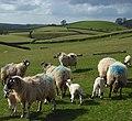Pasture, Renwick - geograph.org.uk - 783151.jpg