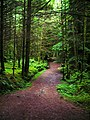 Path Through Glencoe Forest - geograph.org.uk - 892987.jpg