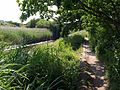 Path by Hackney Canal - geograph.org.uk - 1370916.jpg