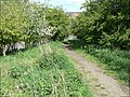 Path onto the embankment - geograph.org.uk - 1280410.jpg
