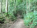 Path through Physgill Glen - geograph.org.uk - 1539368.jpg