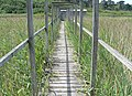 Path to bird hide, Great Pool, Tresco, Scilly - geograph.org.uk - 1617222.jpg