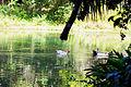 Patos da Lagoa.jpg