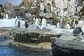 Penguin House, Sea World San Antonio IMG 1626 (2).JPG
