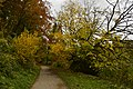 Petit chemin entre les feuillages dorées (22809996075).jpg