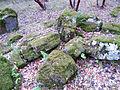 Petrified Forest - Stierch E.jpg