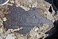 Petroglyphs from Ukhtasar 15092019 (34).jpg