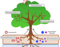 Phytoremediation Process - svg.png