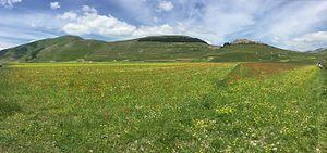 Sibillini Mountains - Lentil and poppy blooming on Piani di Castelluccio.