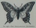 Picture Natural History - No 248 - The Swallow-tail Butterfly.png