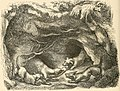 Picture fables (1858) (14749466381).jpg