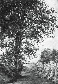 Piet Mondriaan - Laan met roggeschoven - A16 - Piet Mondrian, catalogue raisonné.jpg