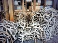 Pile of antlers on floor of bank in dufur, oregon, usa.jpeg