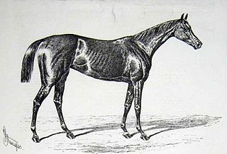 Pilgrimage (horse) British Thoroughbred racehorse