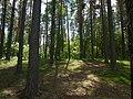 Pine forest, lakeside (5918862805).jpg