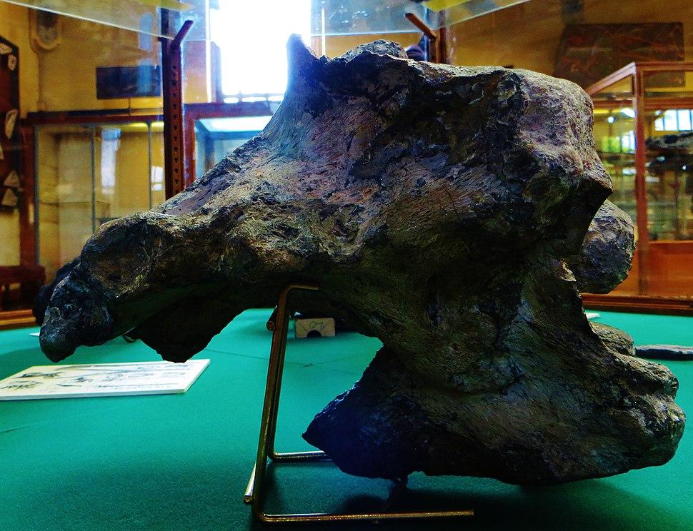 Piveteausaurus divesensis