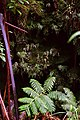 Plants Around the Lava Tube (23848303913).jpg