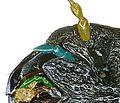 Platyrhinus resinosus detail.jpg