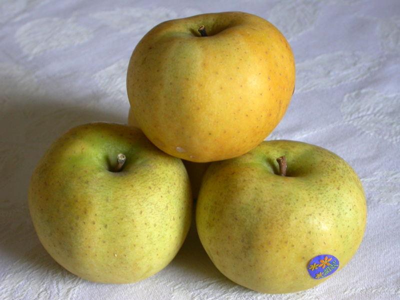 http://upload.wikimedia.org/wikipedia/commons/thumb/c/c8/Pomme_chantecler_belchard.jpg/800px-Pomme_chantecler_belchard.jpg