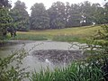 Pond near the entrance to Calke Park - geograph.org.uk - 1429220.jpg