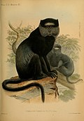 Proceedings of the Zoological Society of London (Mammalia Plate III) (7629926736).jpg