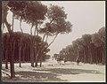 Promenade des Pins á Beyrouth MET DP113880.jpg