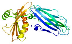 Protein AP2A2 PDB 1b9k.png