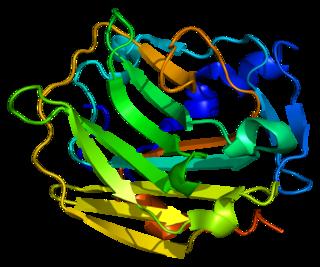 Collagen, type IX, alpha 1